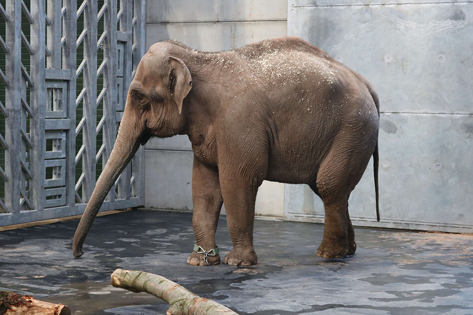 Elephant Tara